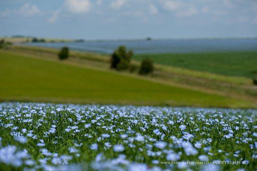 Landscapes Spring 001