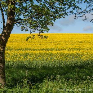 Landscapes Spring 004